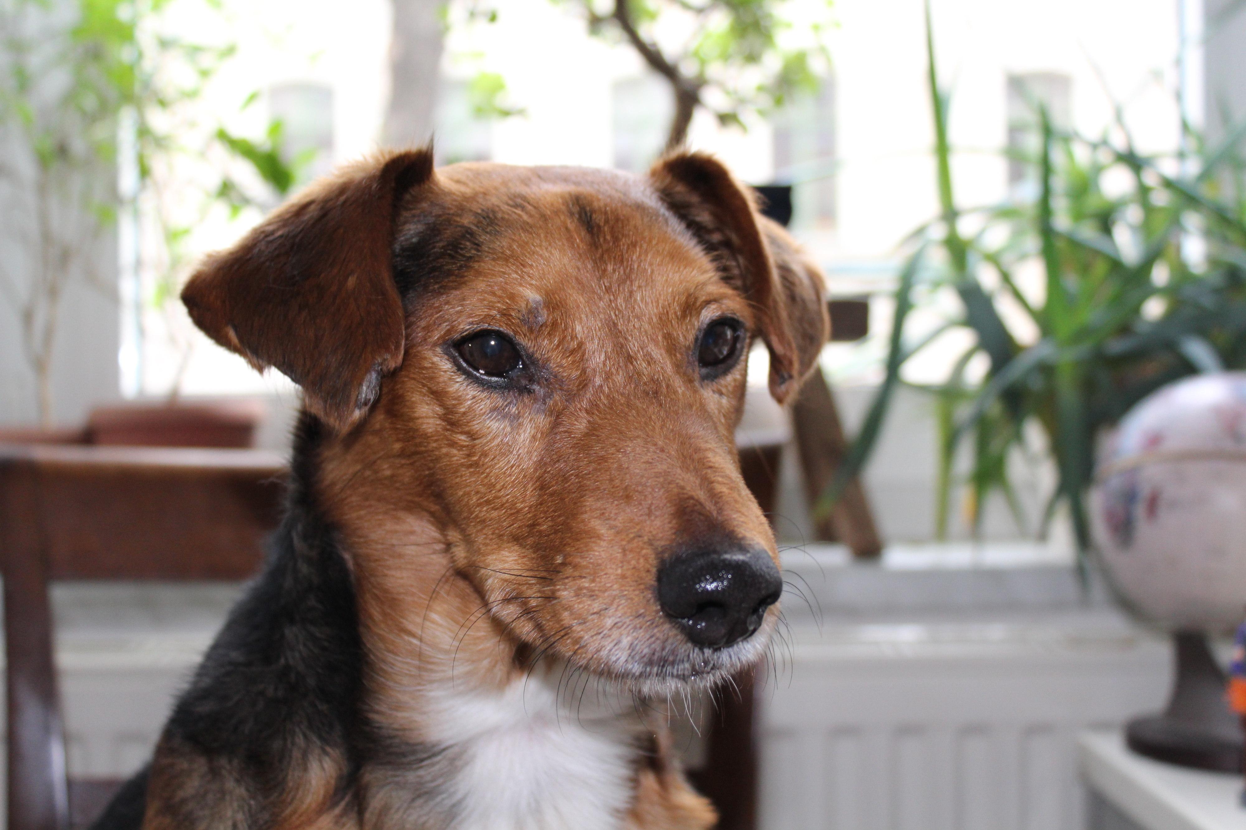 Loki - der Hund