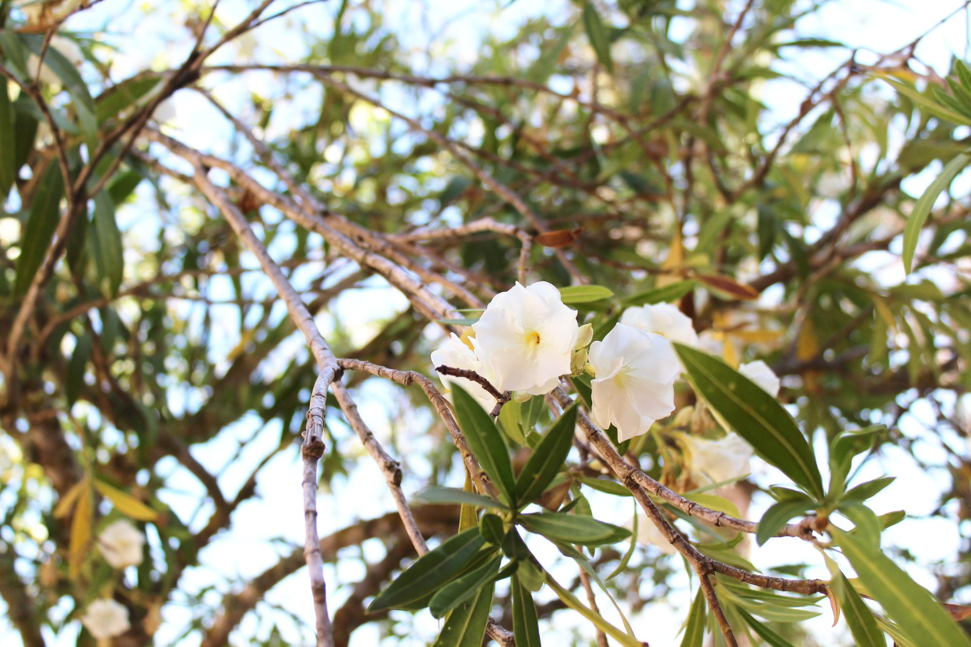 Blumen Mallorca
