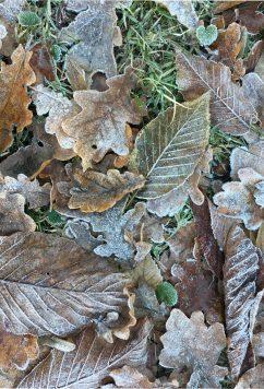 Blätter frau friemel