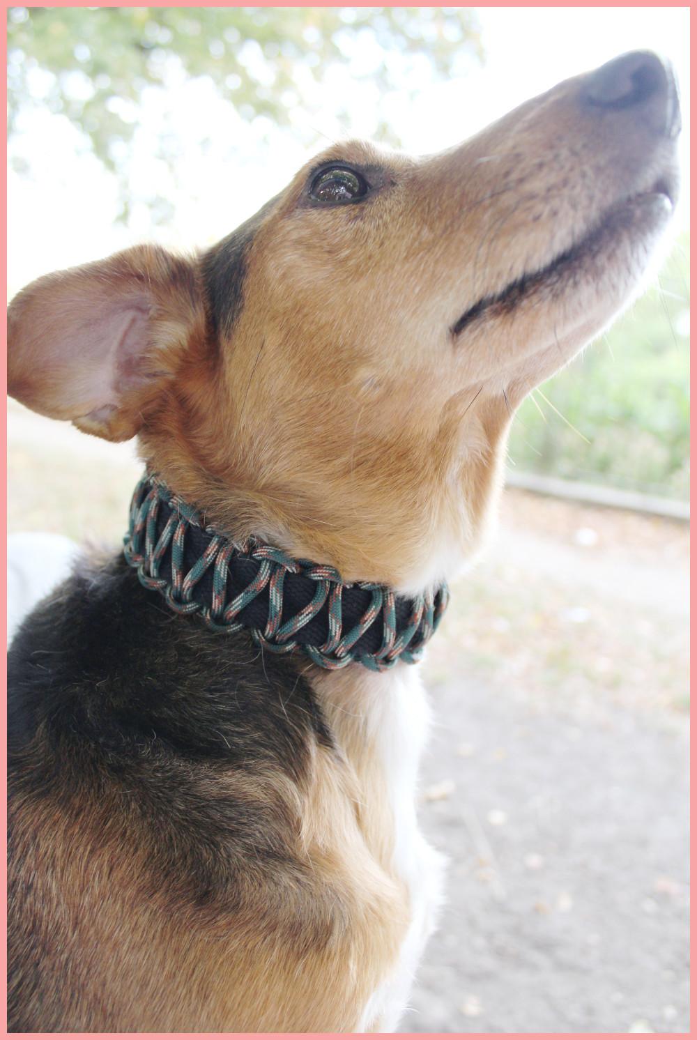 Hundehalsband selber machen mit frau friemel