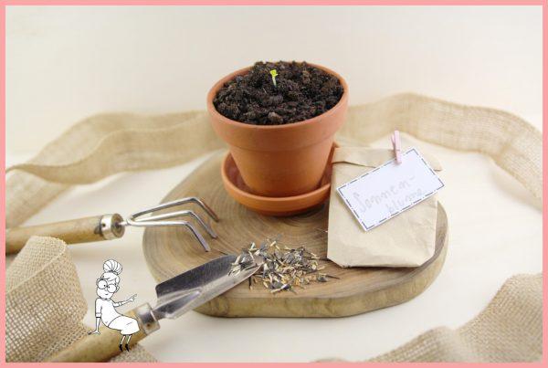 Kleines Muttertagsgeschenk selber machen - Samentüten basteln