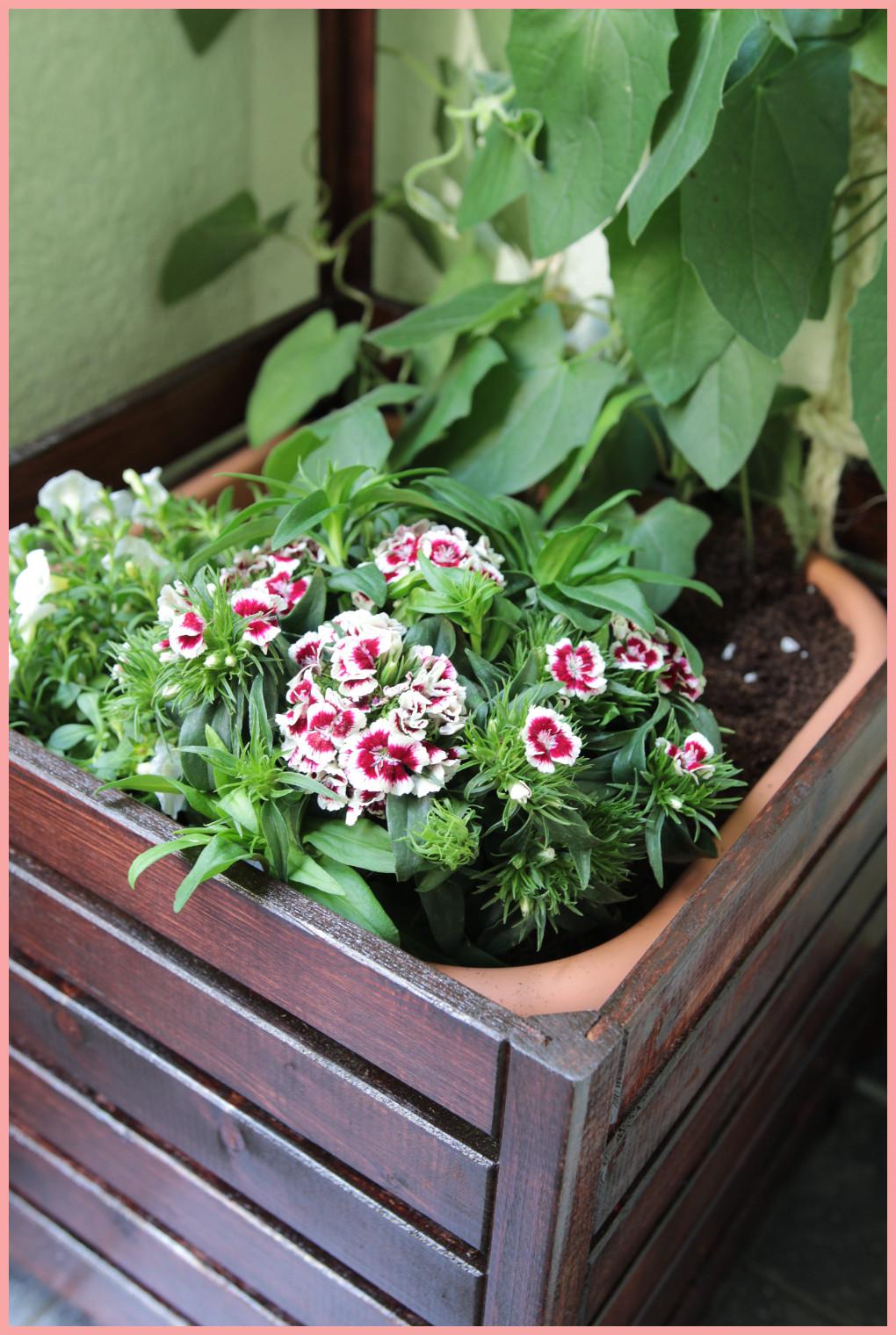 DIY Blumenkasten selber bauen mit Rankhilfe - Blumenarten